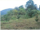 桑取地内下刈りの写真