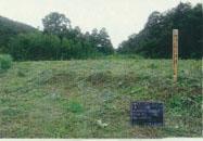 後谷地内下刈りの写真